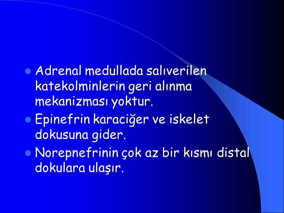 Adrenal medullada salıverilen katekolminlerin geri alınma mekanizması yoktur.