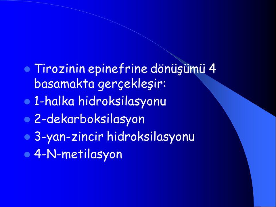 Tirozinin epinefrine dönüşümü 4 basamakta gerçekleşir: