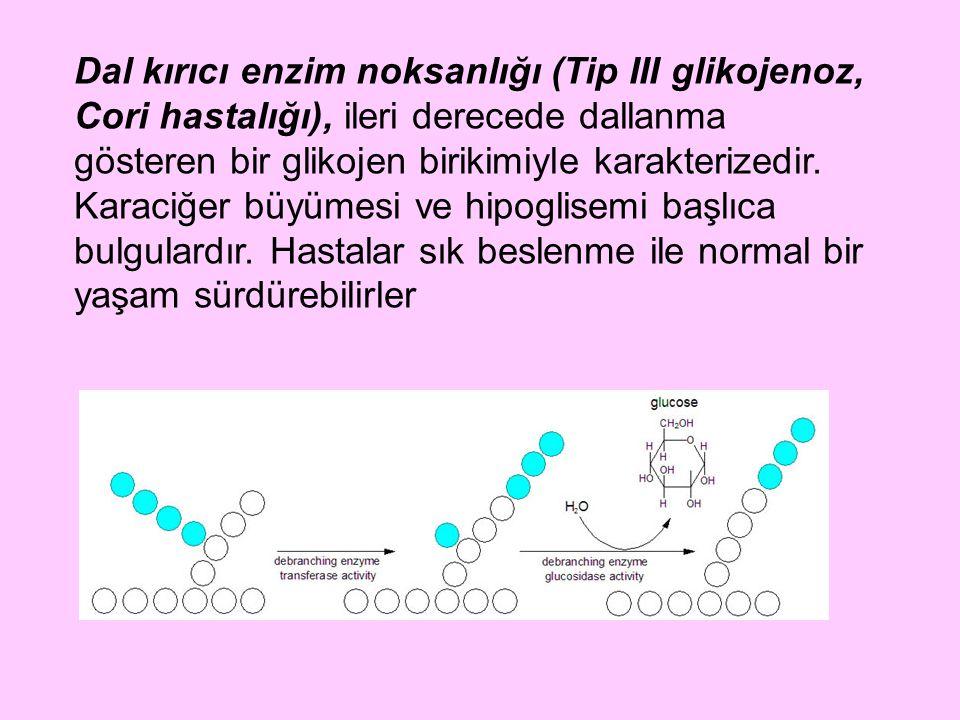 Dal kırıcı enzim noksanlığı (Tip III glikojenoz, Cori hastalığı), ileri derecede dallanma gösteren bir glikojen birikimiyle karakterizedir.