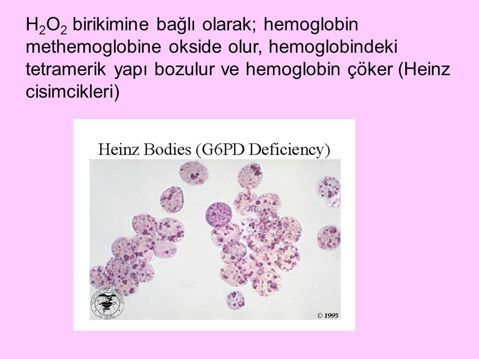 H2O2 birikimine bağlı olarak; hemoglobin methemoglobine okside olur, hemoglobindeki tetramerik yapı bozulur ve hemoglobin çöker (Heinz cisimcikleri)