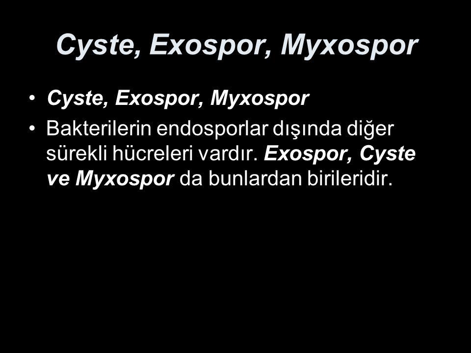 Cyste, Exospor, Myxospor