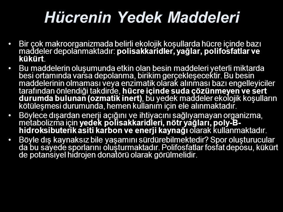 Hücrenin Yedek Maddeleri