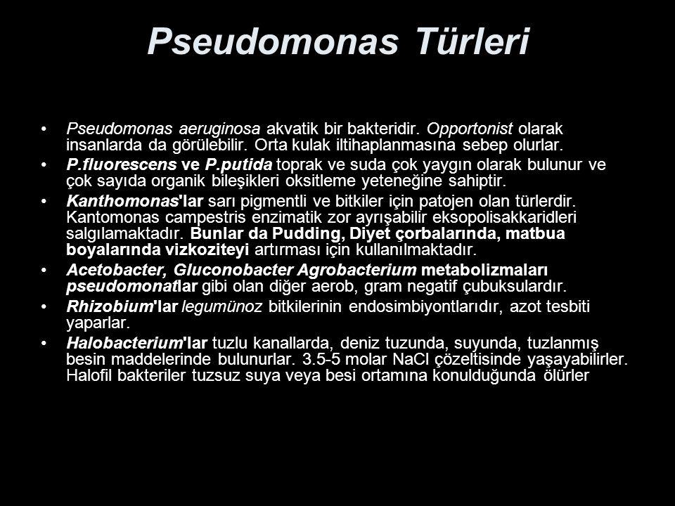 Pseudomonas Türleri