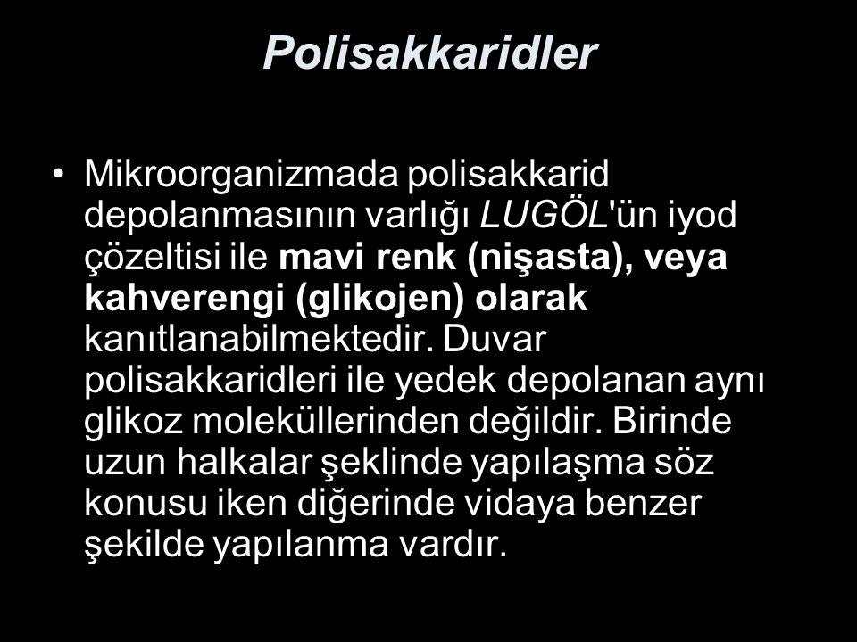 Polisakkaridler