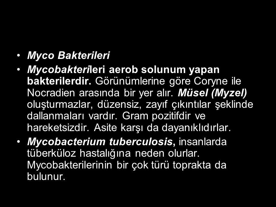 Myco Bakterileri