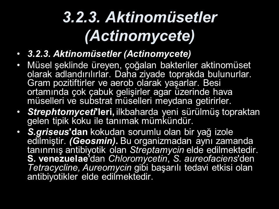 3.2.3. Aktinomüsetler (Actinomycete)