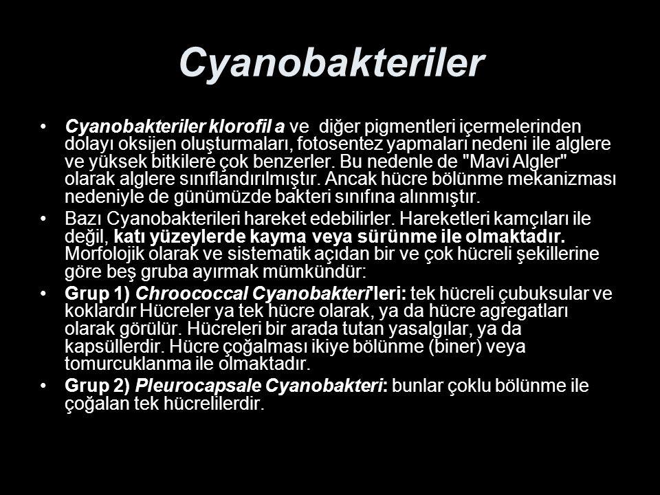 Cyanobakteriler