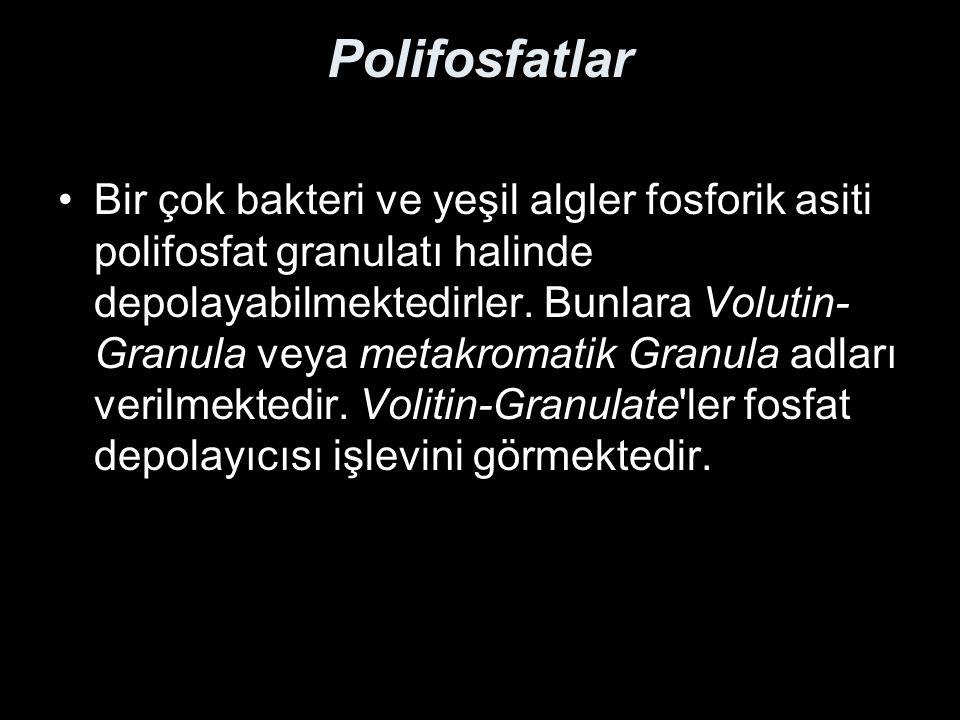 Polifosfatlar