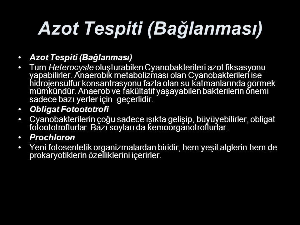 Azot Tespiti (Bağlanması)