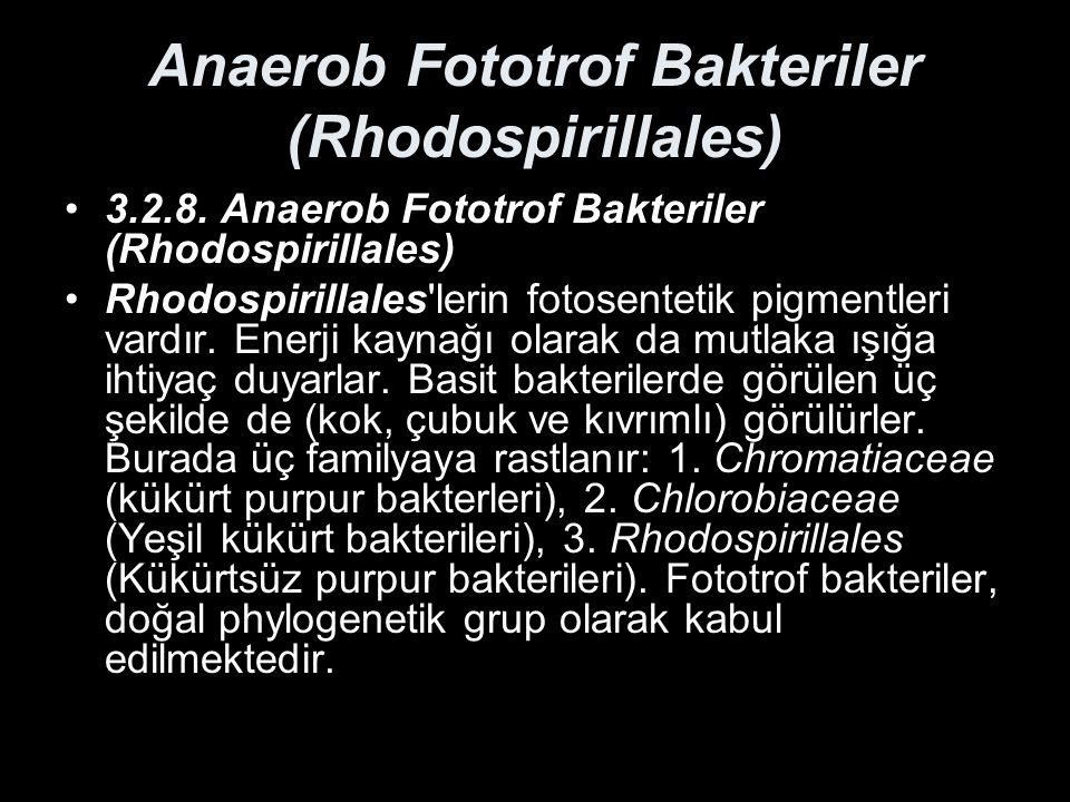 Anaerob Fototrof Bakteriler (Rhodospirillales)