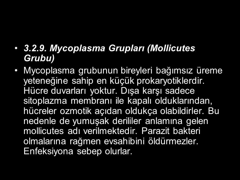 3.2.9. Mycoplasma Grupları (Mollicutes Grubu)