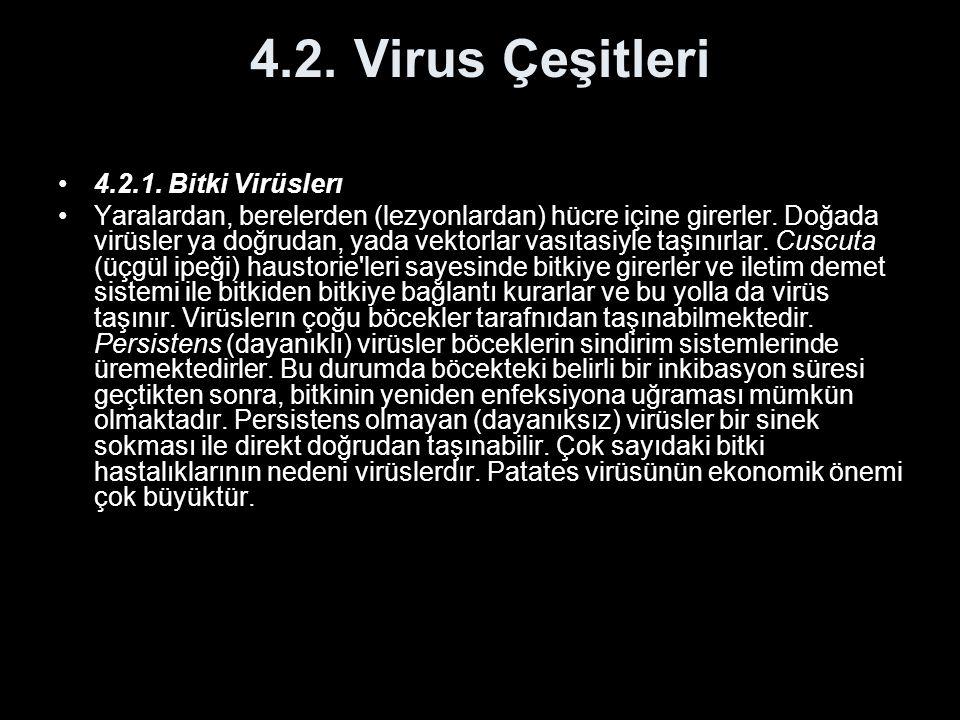 4.2. Virus Çeşitleri 4.2.1. Bitki Virüslerı