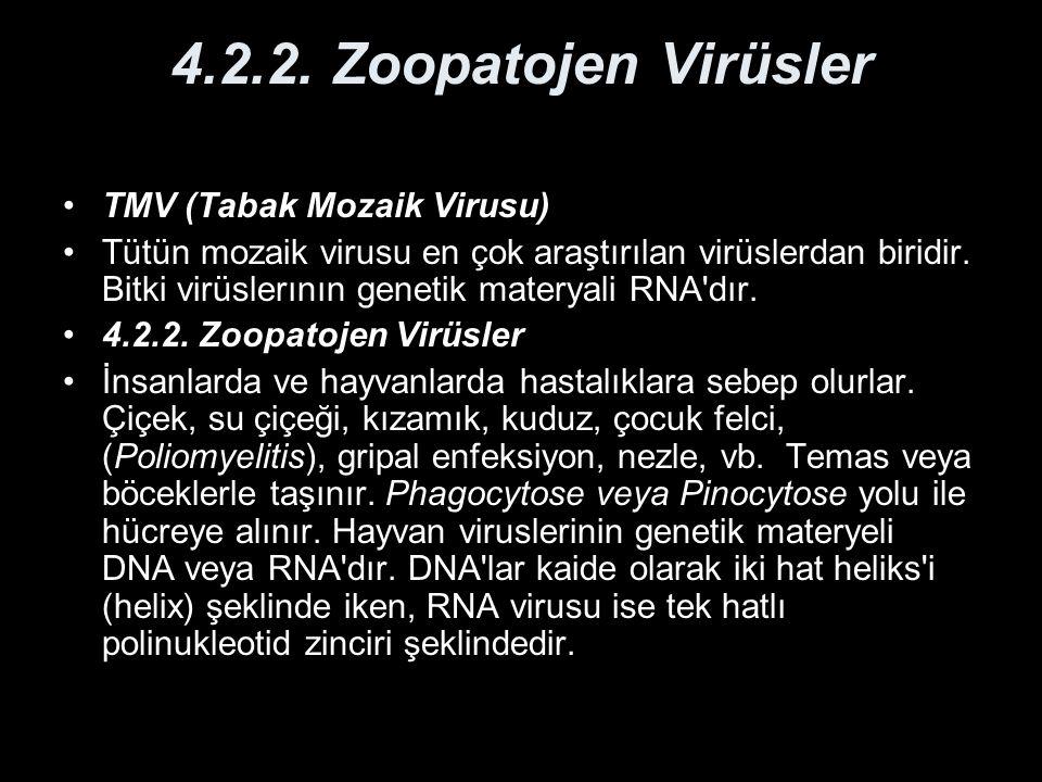 4.2.2. Zoopatojen Virüsler TMV (Tabak Mozaik Virusu)