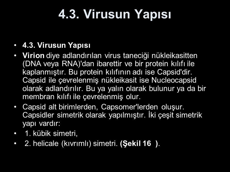 4.3. Virusun Yapısı 4.3. Virusun Yapısı
