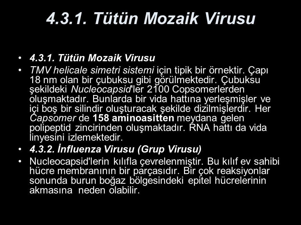 4.3.1. Tütün Mozaik Virusu 4.3.1. Tütün Mozaik Virusu