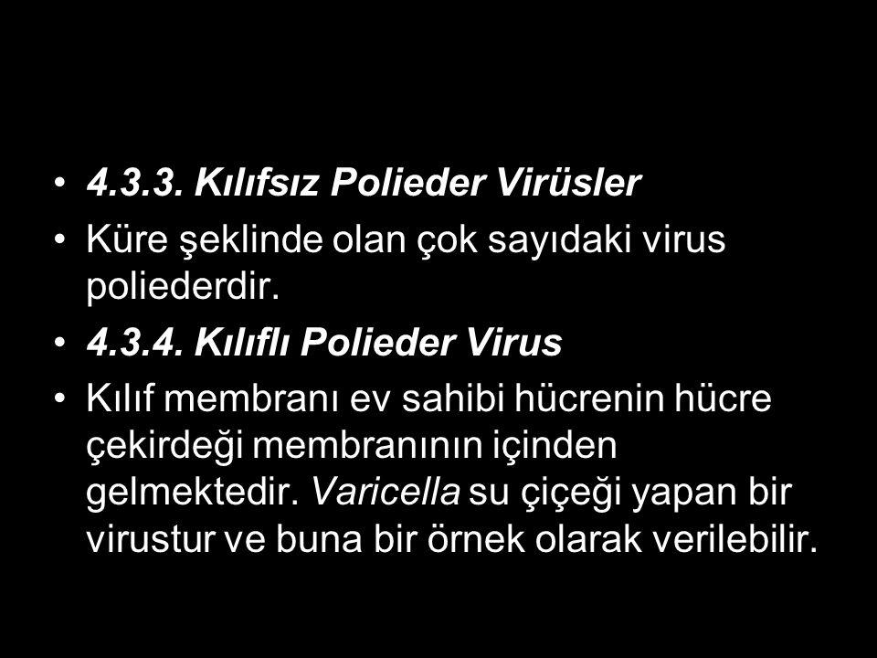 4.3.3. Kılıfsız Polieder Virüsler