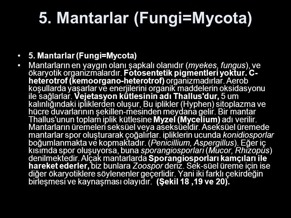 5. Mantarlar (Fungi=Mycota)