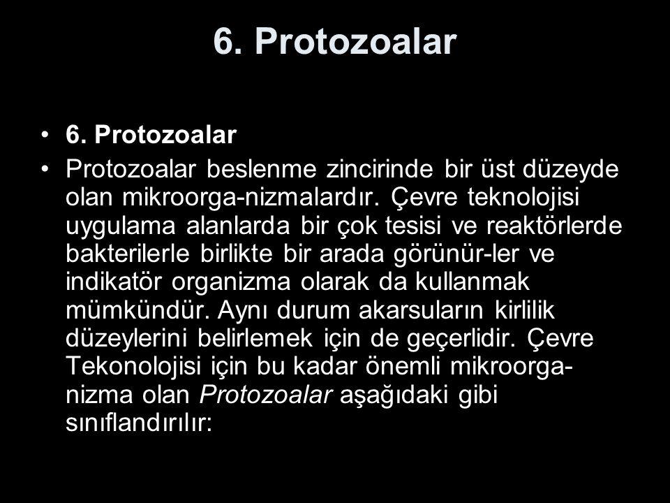 6. Protozoalar 6. Protozoalar