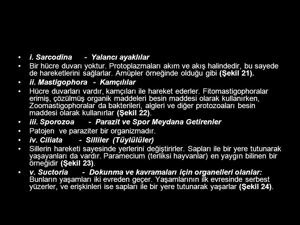 i. Sarcodina - Yalancı ayaklılar