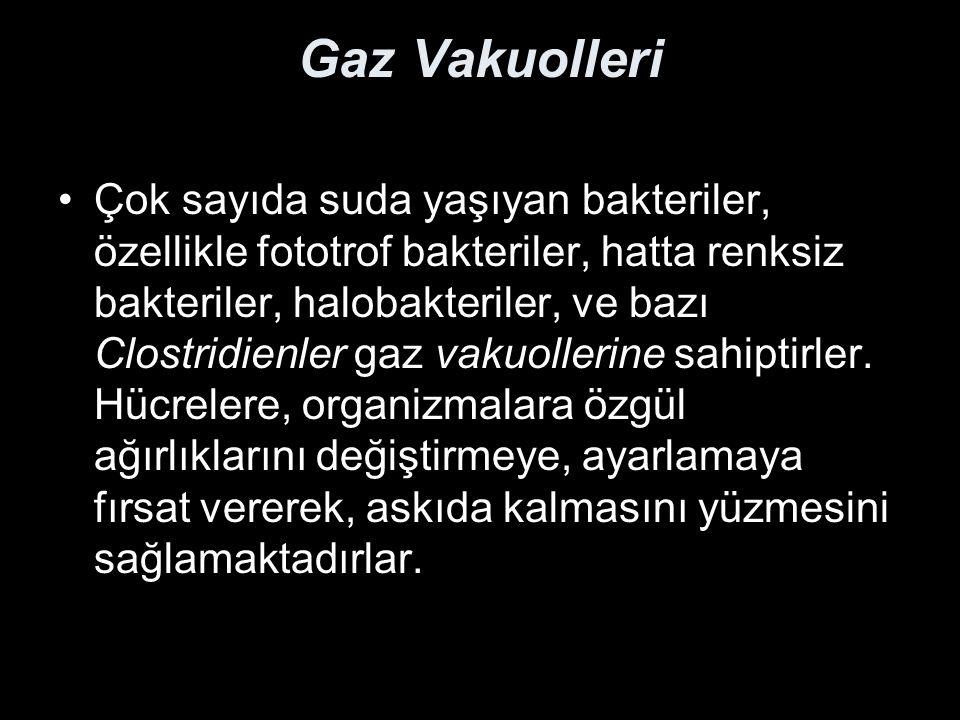 Gaz Vakuolleri