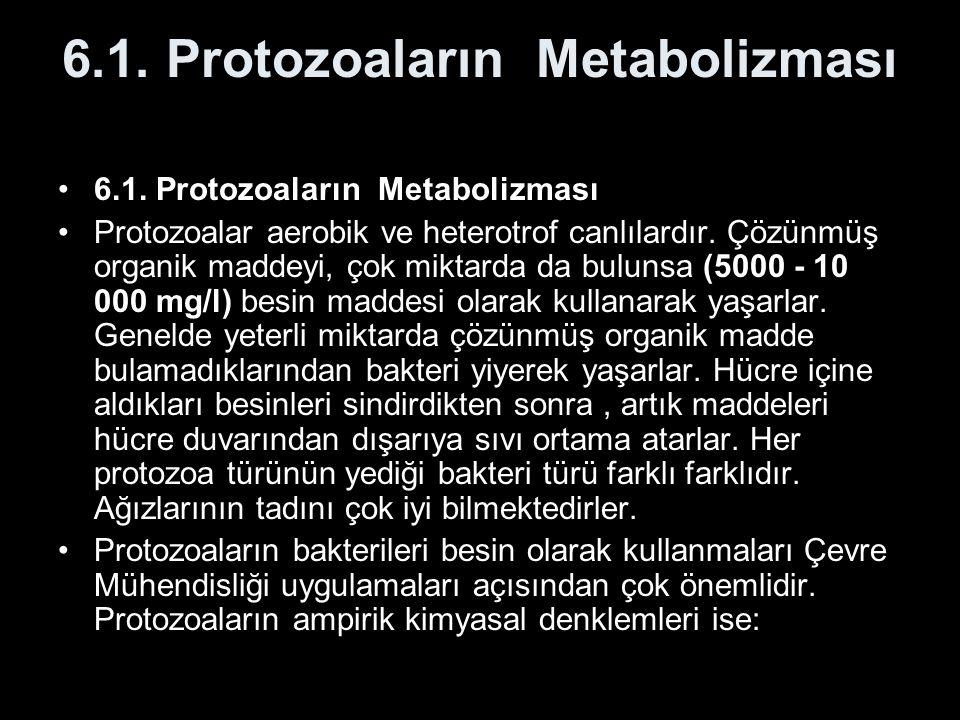 6.1. Protozoaların Metabolizması