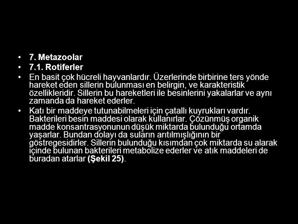 7. Metazoolar 7.1. Rotiferler.
