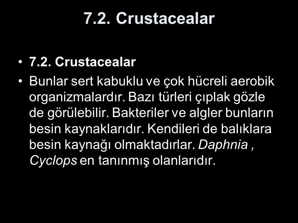 7.2. Crustacealar 7.2. Crustacealar