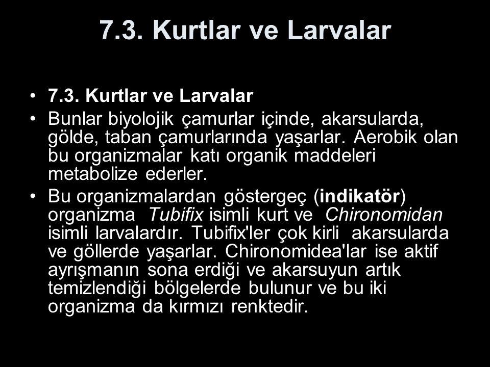 7.3. Kurtlar ve Larvalar 7.3. Kurtlar ve Larvalar