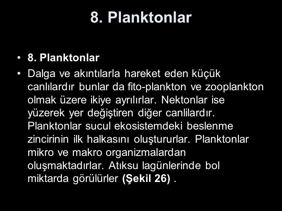 8. Planktonlar 8. Planktonlar