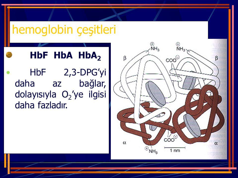 hemoglobin çeşitleri HbF HbA HbA2