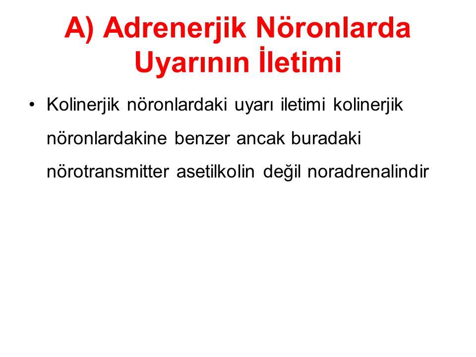 A) Adrenerjik Nöronlarda Uyarının İletimi