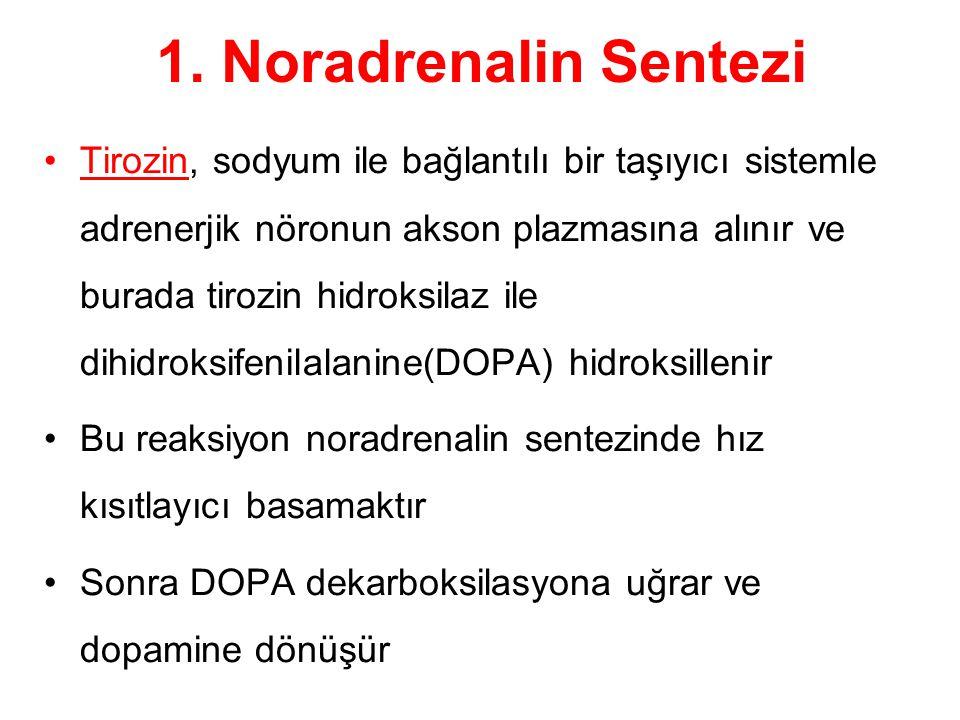 1. Noradrenalin Sentezi