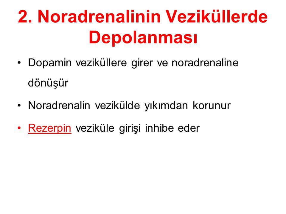 2. Noradrenalinin Veziküllerde Depolanması