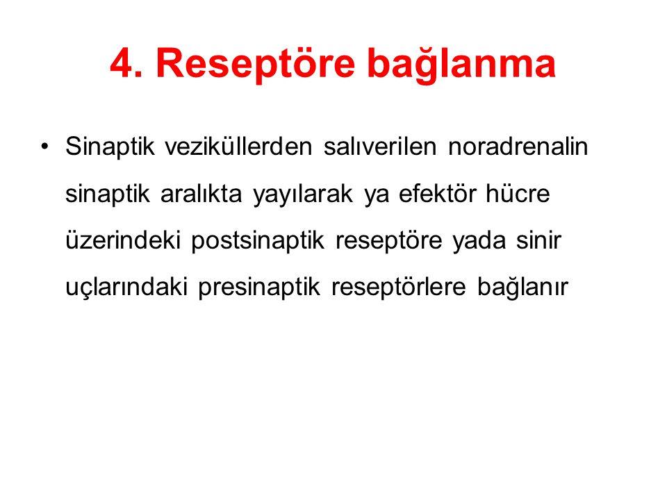 4. Reseptöre bağlanma