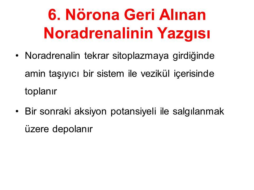 6. Nörona Geri Alınan Noradrenalinin Yazgısı