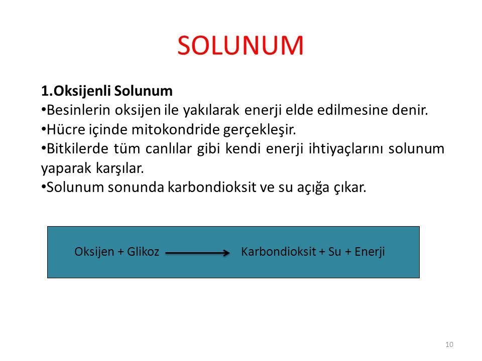 SOLUNUM 1.Oksijenli Solunum