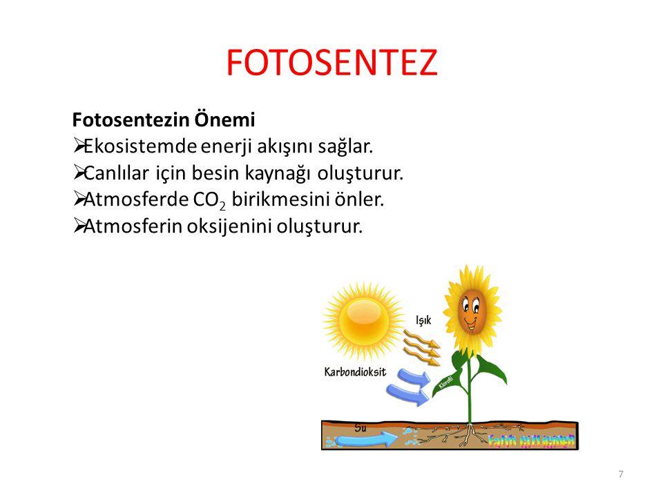 FOTOSENTEZ Fotosentezin Önemi Ekosistemde enerji akışını sağlar.