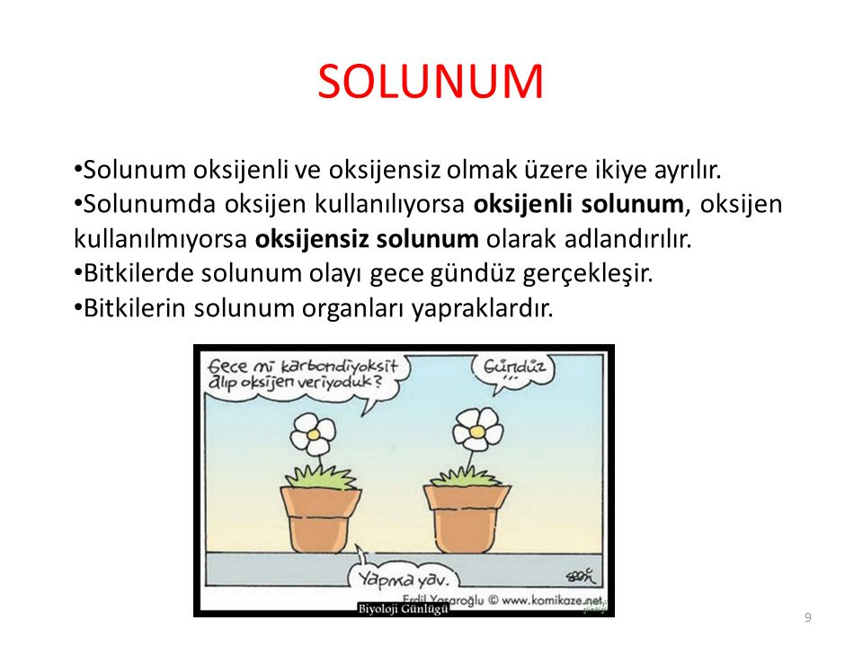 SOLUNUM Solunum oksijenli ve oksijensiz olmak üzere ikiye ayrılır.