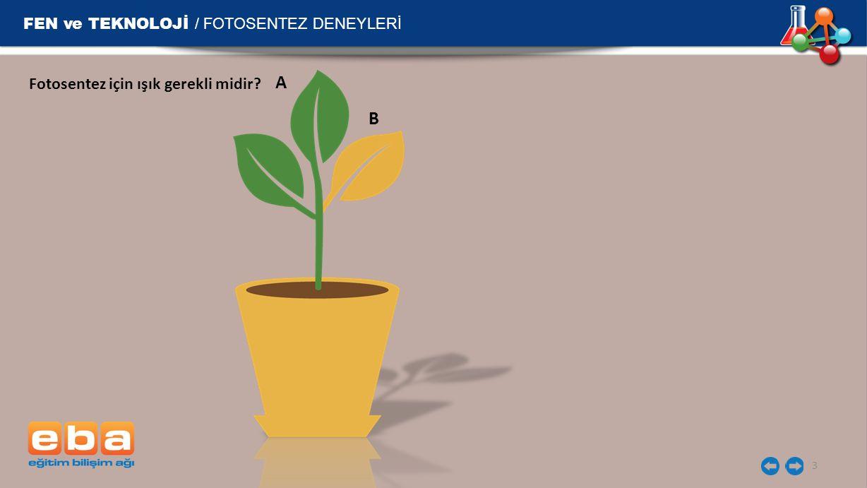FEN ve TEKNOLOJİ / FOTOSENTEZ DENEYLERİ