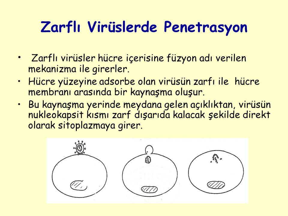 Zarflı Virüslerde Penetrasyon