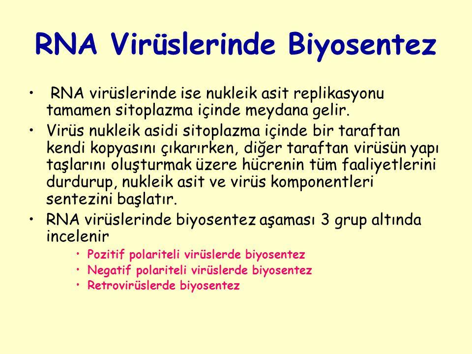RNA Virüslerinde Biyosentez