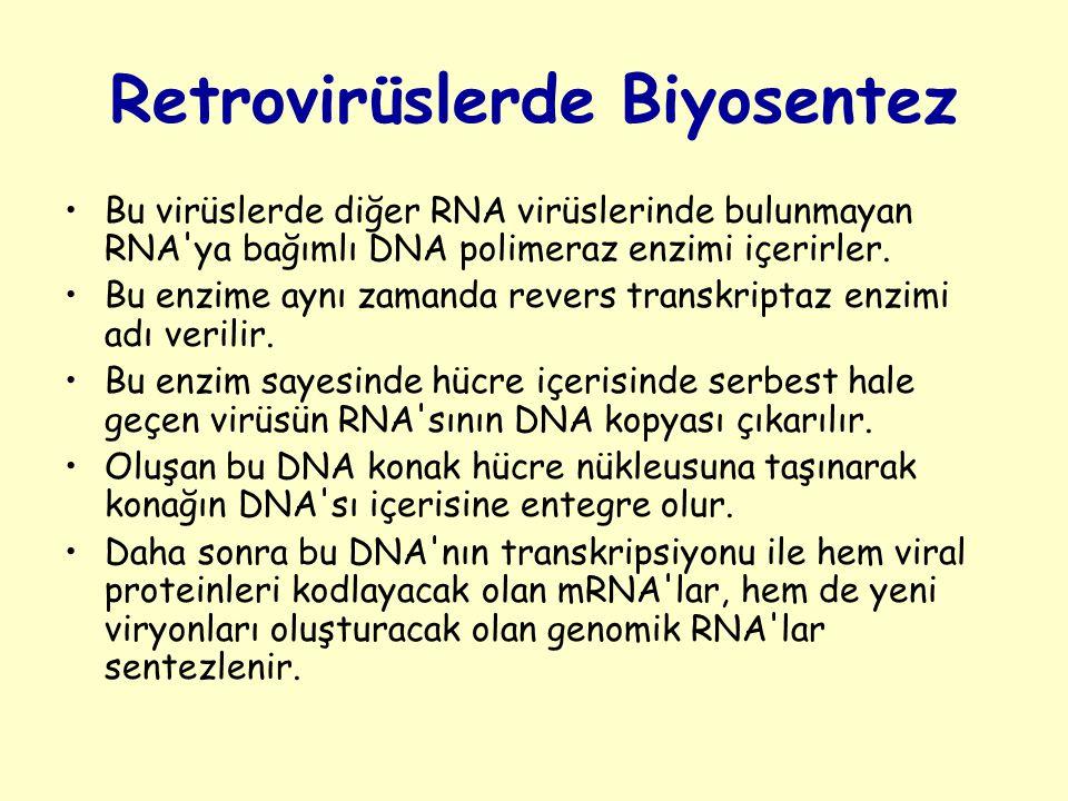 Retrovirüslerde Biyosentez