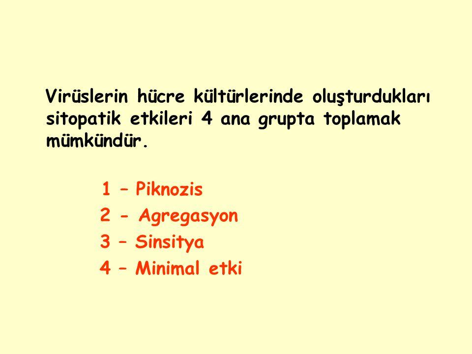 1 – Piknozis 2 - Agregasyon 3 – Sinsitya 4 – Minimal etki