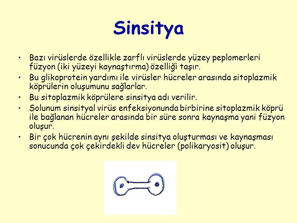 Sinsitya Bazı virüslerde özellikle zarflı virüslerde yüzey peplomerleri füzyon (iki yüzeyi kaynaştırma) özelliği taşır.