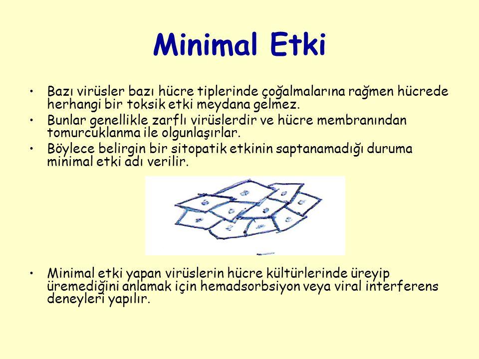 Minimal Etki Bazı virüsler bazı hücre tiplerinde çoğalmalarına rağmen hücrede herhangi bir toksik etki meydana gelmez.