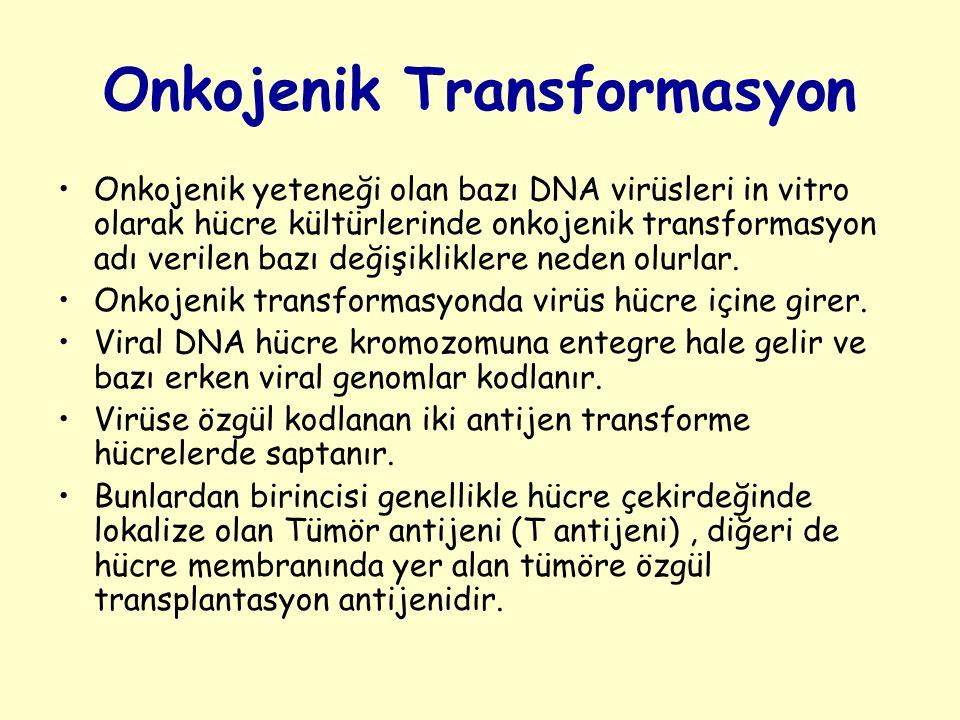 Onkojenik Transformasyon