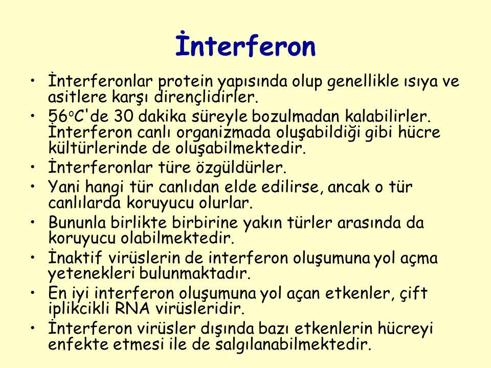 İnterferon İnterferonlar protein yapısında olup genellikle ısıya ve asitlere karşı dirençlidirler.