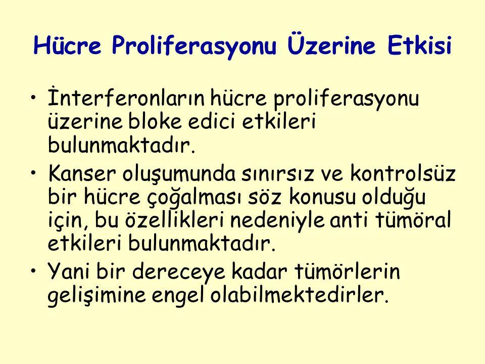 Hücre Proliferasyonu Üzerine Etkisi