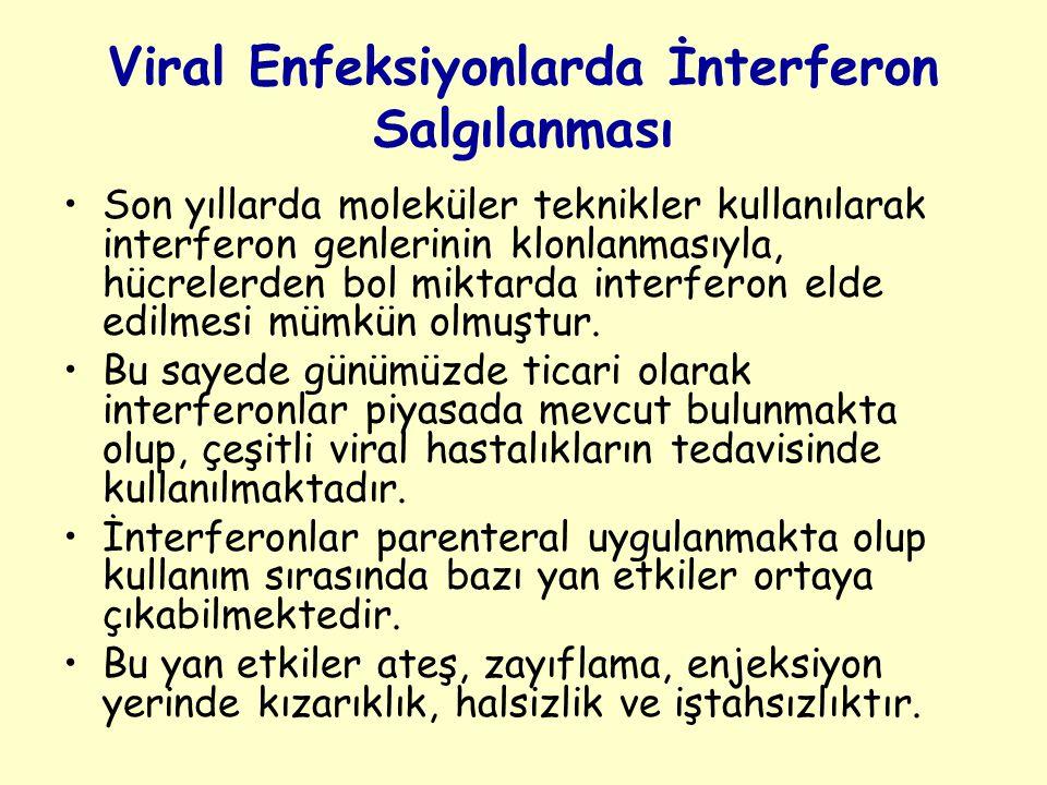 Viral Enfeksiyonlarda İnterferon Salgılanması
