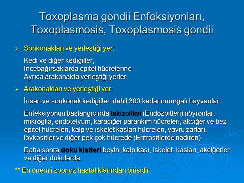 Toxoplasma gondii Enfeksiyonları, Toxoplasmosis, Toxoplasmosis gondii